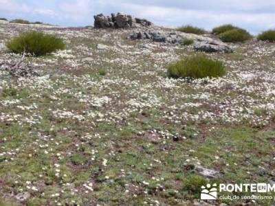 Ruta de Senderismo - Altos del Hontanar; zona norte madrid